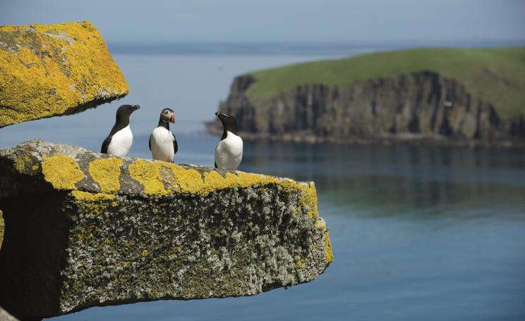 Seabirds on the Shiant Isles