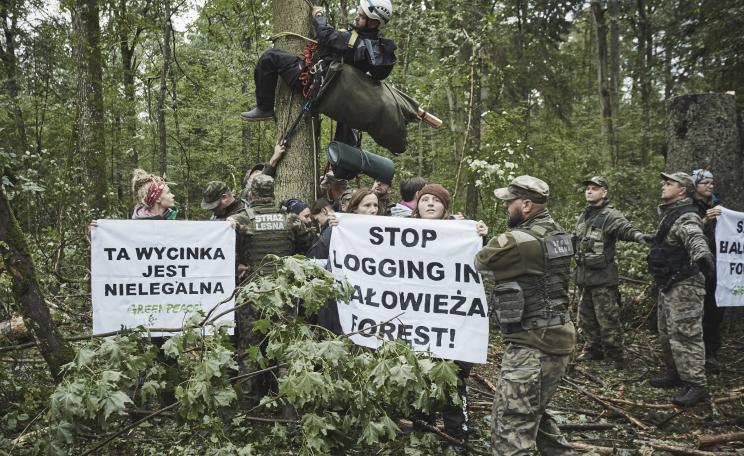 Anti-logging protestors from Greenpeace Poland