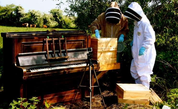 Lily Hunter Green's piano-beehive, pictured in a sunny field