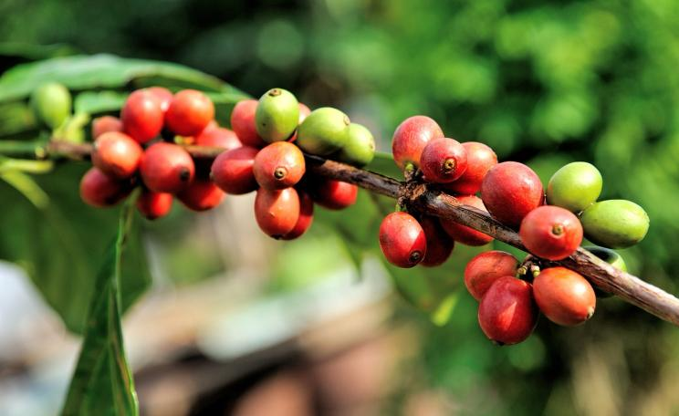 coffee industry sustainable