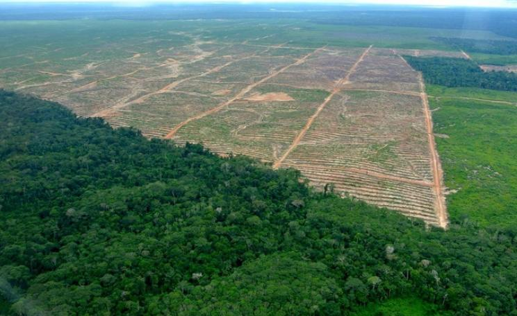 Palm oil deforestation in Peru