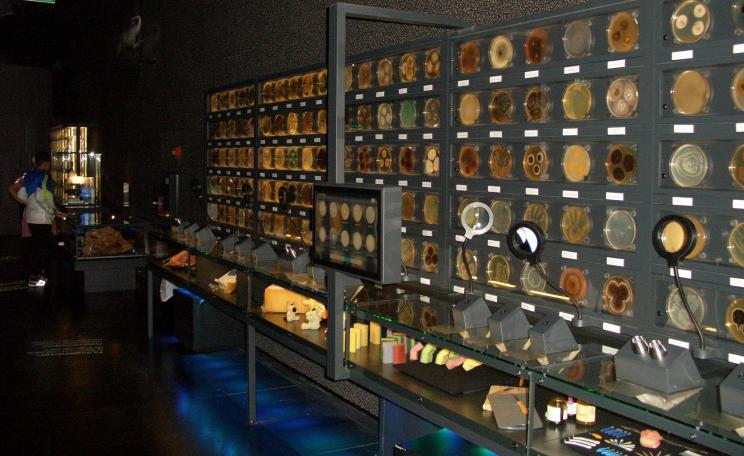 A photograph of a display at the Micropia museum in Amsterdam