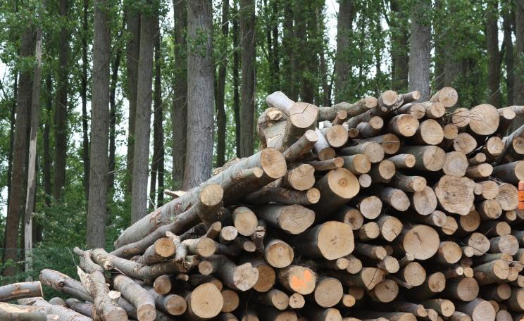 Wood used for biomass
