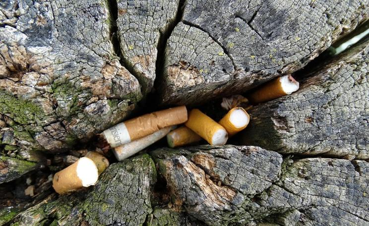 Cigarette litter in a tree trunk