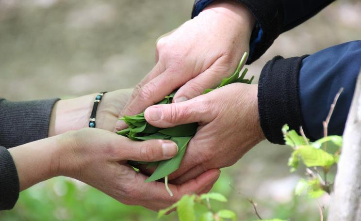 Hands sharing plants