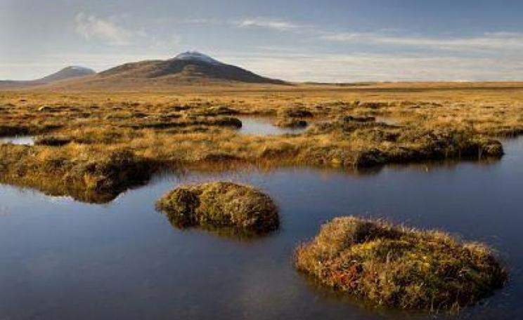 Blanket bog in Forsinard, Scotland
