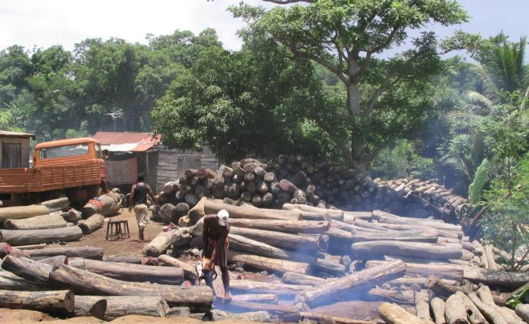 Illegal export of rosewood