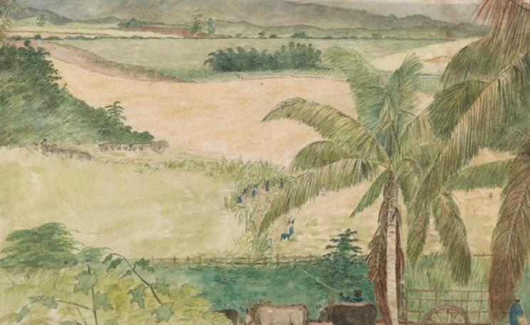 William Berryman, Sugar Estate - Negros Cutting Cane, 1808