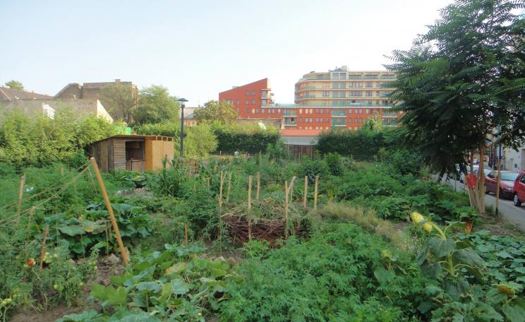 Urban agroforestry in Budapest