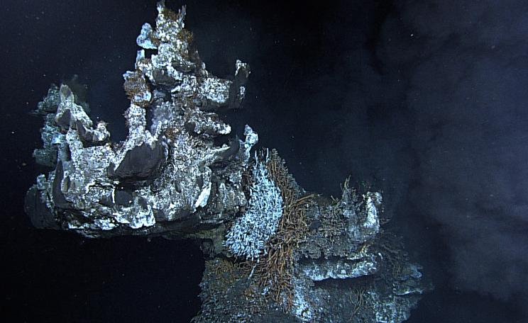 Venting fumeroles just from the crown of Godzilla hydrothermal vent,