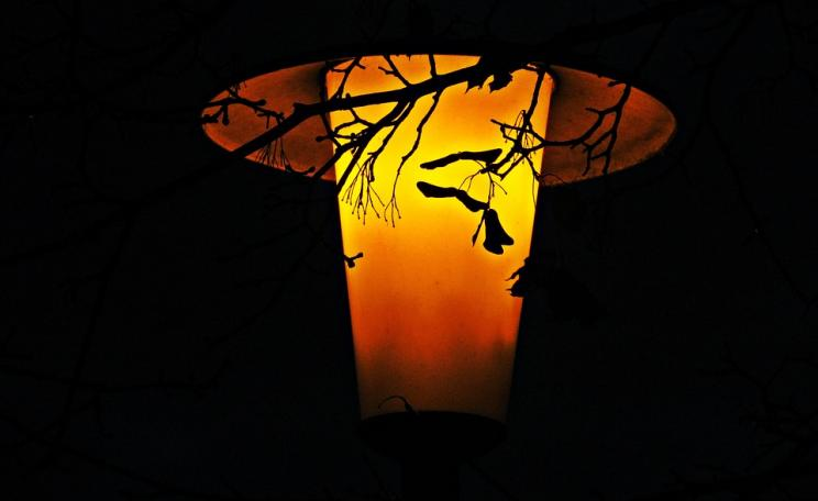 leaves by lantern
