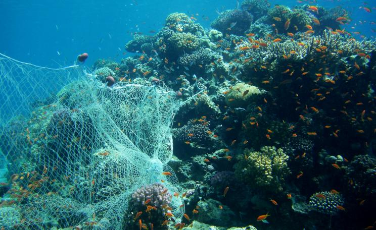 Nets caught on coral
