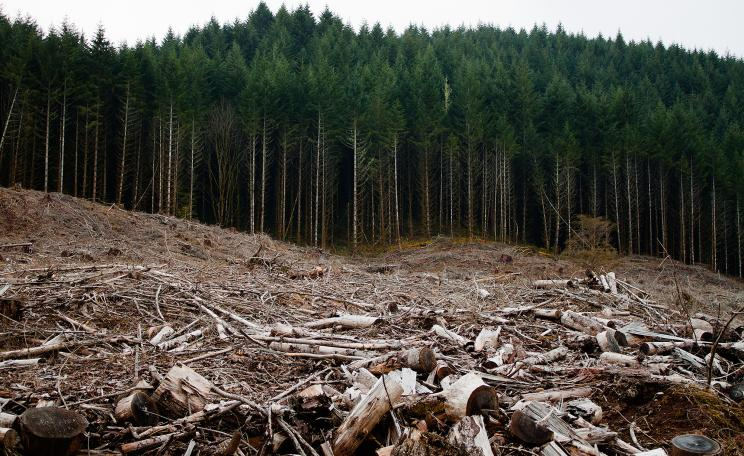 Clearcutting in oregon