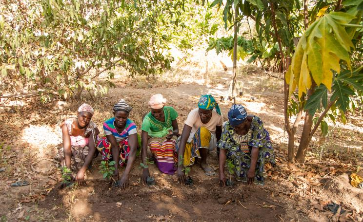 women_in_mali_currently_support_by_tree_aid_planting_tree_sapling