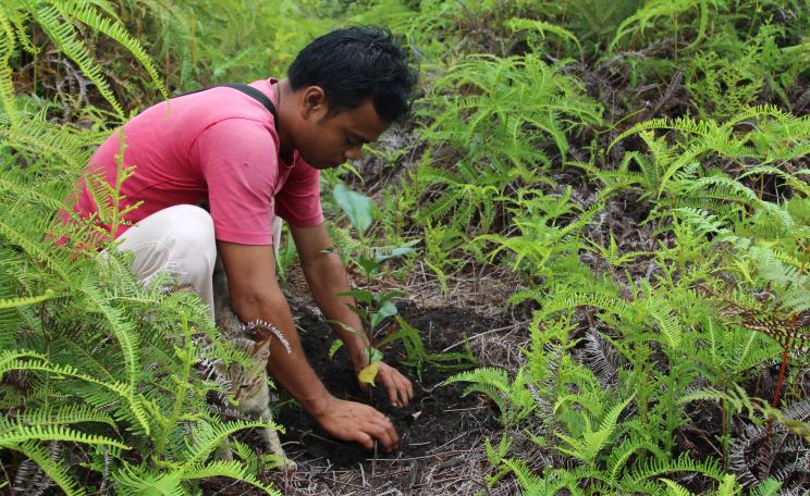 Reforestation in Kalimantan