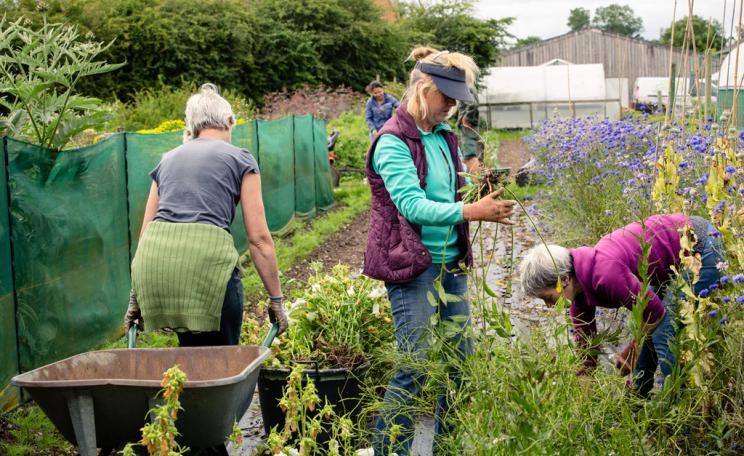 Women at allotment