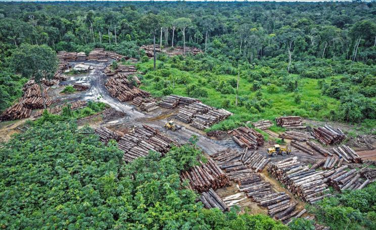 Illegal logging on Pirititi indigenous amazon lands