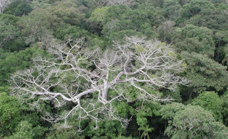 Megadrought in the Amazon Rainforest