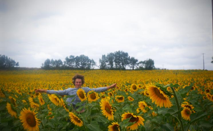 Sheldrake sunflowers