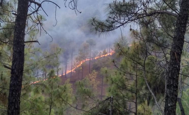 Forest fire in Chir Pine forests near Chitai, Almora District, Uttarakhand, April 2016