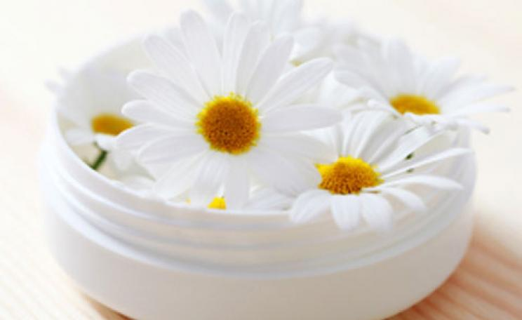 Camomile face cream