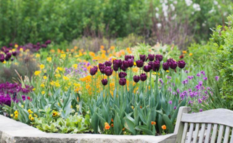 How to…build a raised flowerbed