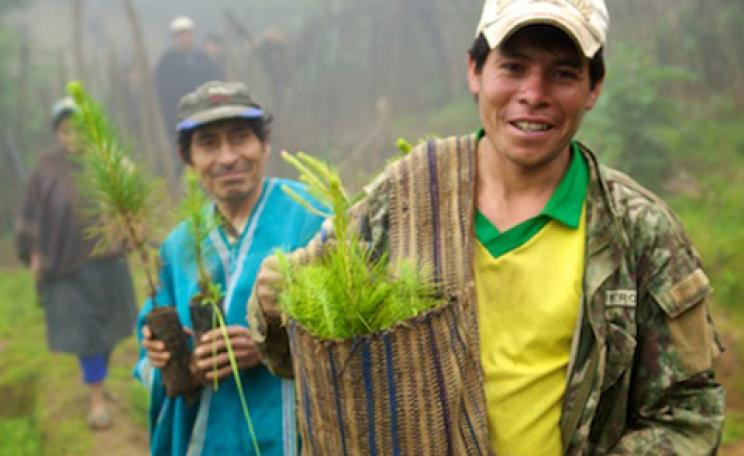 Cafedirect Carbon Credit reforestation project