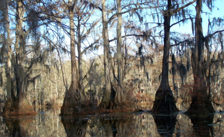 For the chop - a wetland forest within Enviva's sourcing area near Ahoskie. Photo: Dogwood Alliance.