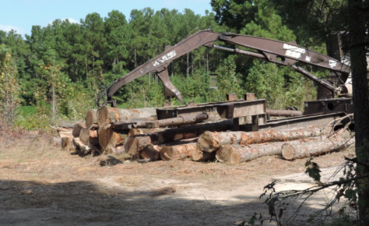 On its way to Drax? A loader picking up trees from a clearcut for Enviva near the Ahoskie mill, North Carolina. Photo: Dogwood Alliance.