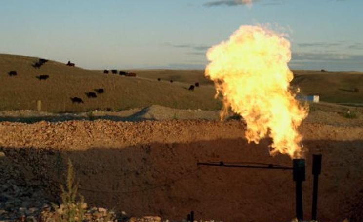 Flaring the Bakken shale with cows, North Dakota. Photo: Sarah Christianson / Earthworks via Flickr.