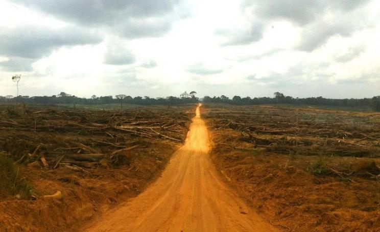 "Local community forest land cleared and planted by Golden Veroleum in Butaw District, Sinoe County, previously contained areas of high quality forest many stories high. A woman from a nearby village described that ""way back we had land to make farms and"