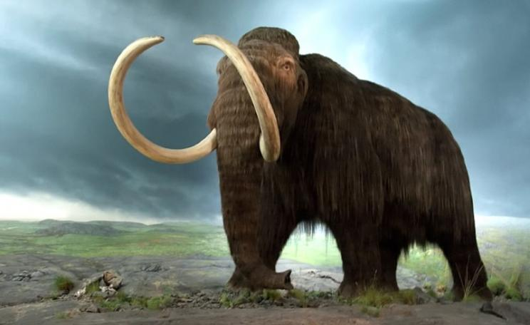 There's a mammoth surprise lurking in the permafrost: 1,700 billion tonnes of frozen carbon. Let that go and the world's climate may never be the same. BC Museum Photo: Tyler Ingram via Flickr (CC BY-NC-ND).