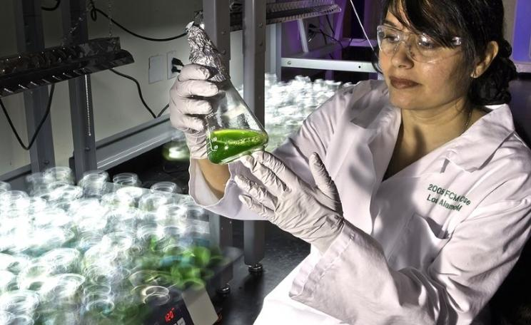 At the New Mexico Consortium, Los Alamos scientists are using genetic engineering to improve algae strains for increased biomass yield and carbon capture efficiency. Photo: Los Alamos National Laboratory via Flickr (CC BY-NC-ND).