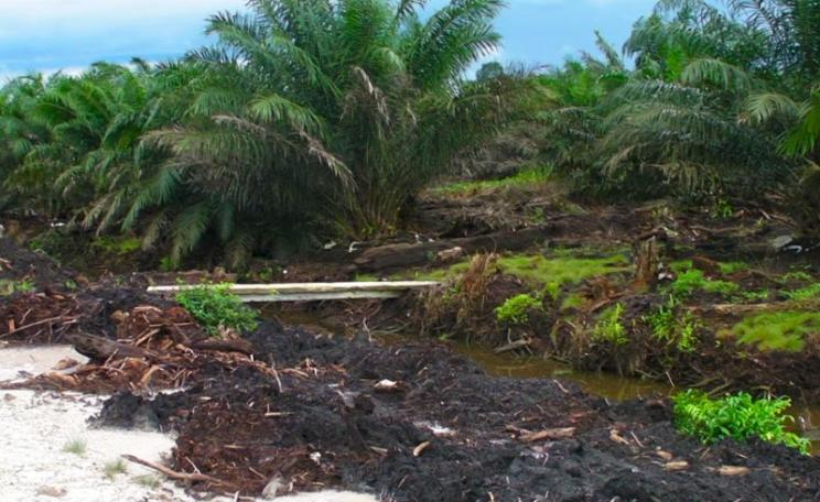Even this could be called 'climate smart agriculture' - because the term is undefined. Oil palm plantations on deep peat in Indonesian Borneo. Photo: Rainforest Action Network via Flickr (CC BY-NC).
