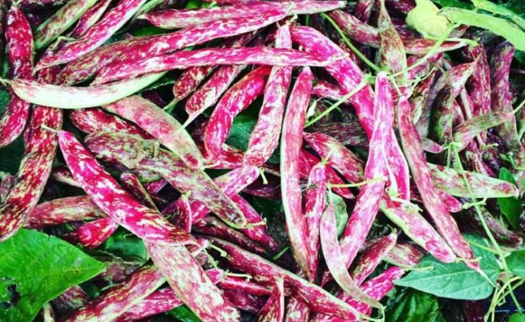 There is another way: organic Borlotti beans from Sandy Lane Farm, Oxfordshire. Photo: Sandy Lane Farm via Facebook.