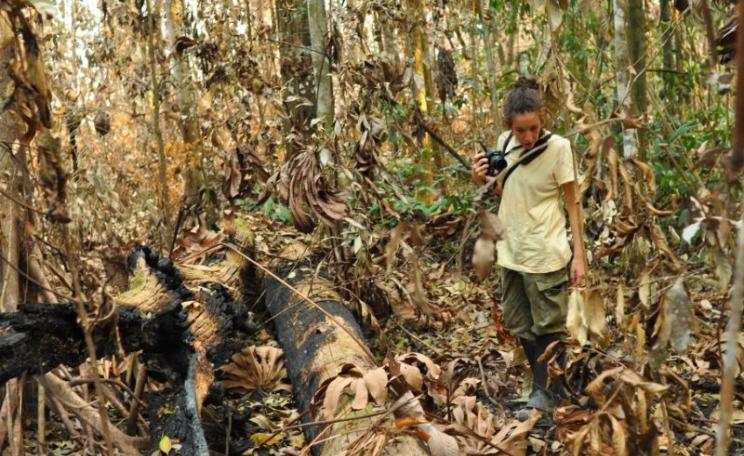 Erika Berenguer examines recently burned primary forest. Photo: Jos Barlow, Author provided.
