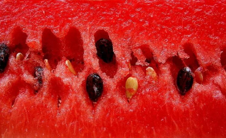 These Venezuelan watermelon (sandía) seeds are now protected by law from corporate takeover, while GMOs are banned. Photo: Rufino Uribe via Flickr (CC BY-SA).