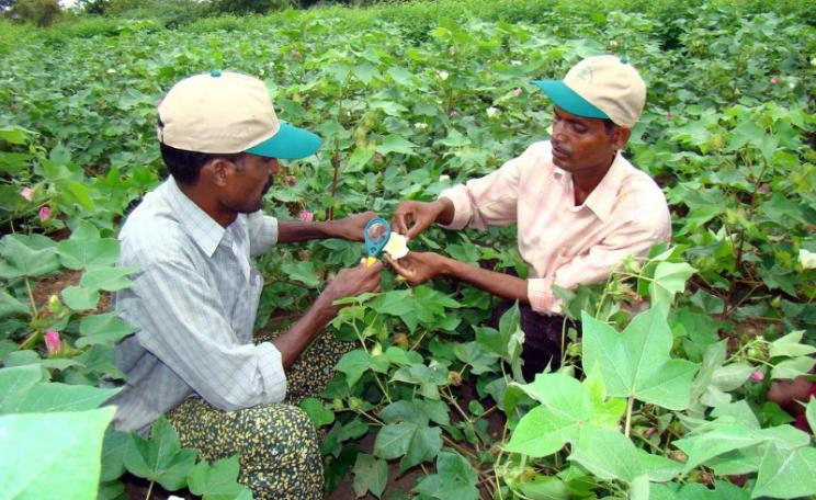 There is another way: cotton farmers in India studying about insects as part of a course on 'integrated pest management'. Photo: S. Jayaraj / The AgriCultures Network via Flickr (CC BY-NC-SA).