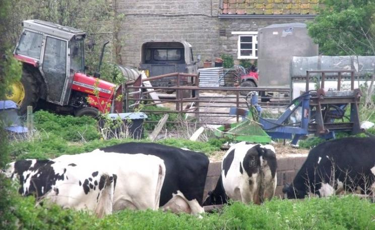 Dairy farm in Somerset, a county with a high bTB incidence. The farm has a certain dilapidated rustic charm, but it's hardly an environment in which strict biosecurity can be guaranteed. Photo: Elliott Brown via Flickr (CC BY-NC).