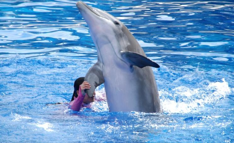 Dolphins are the most intelligent non-human animals, so why do we still allow companies like Seaworld violate their rights? Photo: BenSpark via Flickr (CC BY-NC-SA)