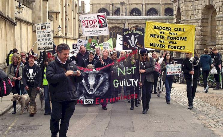 Anti badger cull demo in Oxford, 25th October 2014. Photo: Snapshooter46 via Flickr (CC BY-NC-SA).