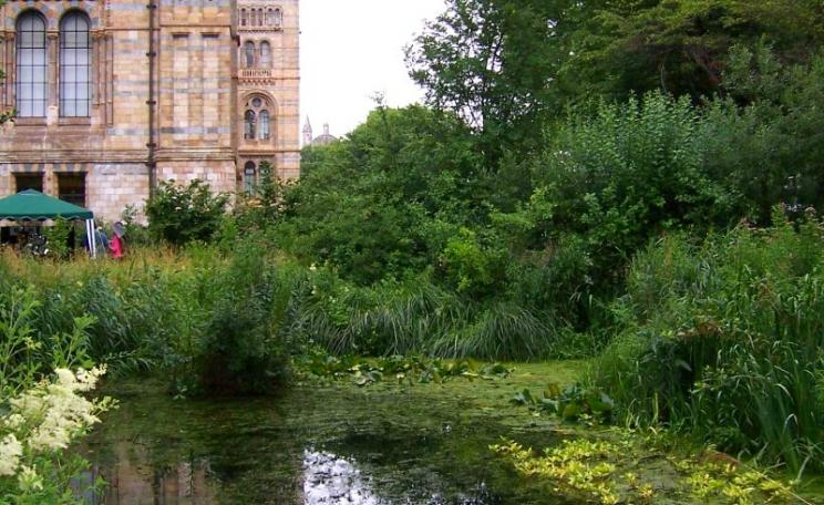A haven of peace, tranquillity and biodiversity in the heart of London: the wildlife garden at the Natural History Museum. Photo: Cary Grant.