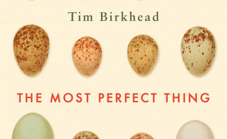 'The most perfect thing - inside (and outside ) a bird's egg' - from front cover.