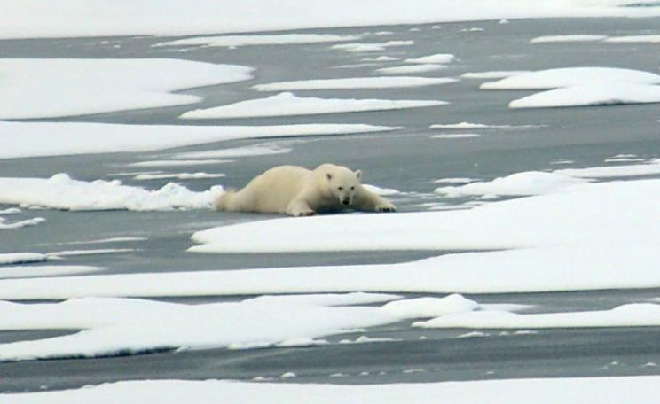 Last month's record low sea ice in the Arctic is bad news for the global climate, and for the polar bears who depend on the ice for their hunting. Photo: Patrick Kelley / US Coast Guard via Flickr (Public Domain).