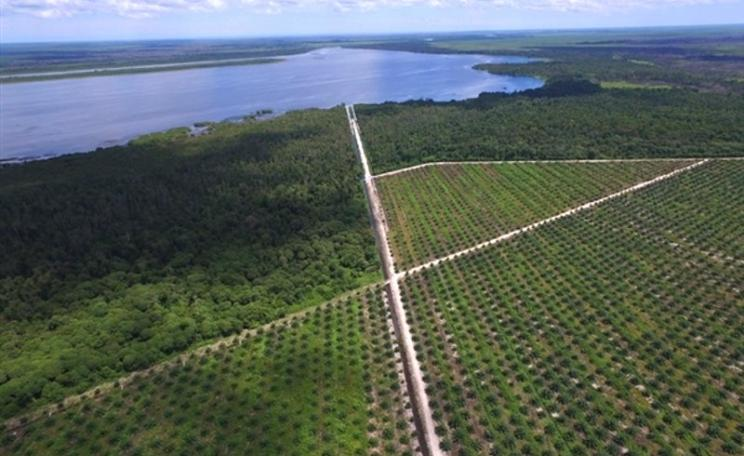 Drone footage documents a primary drainage canal cutting through an identified 'No Go' area of buffer forest in an IOI oil palm concession in Ketapang, West Kalimantan. Photo: Bjorn Vaugn / Greenpeace.