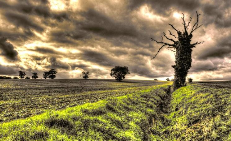 Suffolk farmland at dusk. Photo: Jimmy - S via Flickr (CC BY-NC).