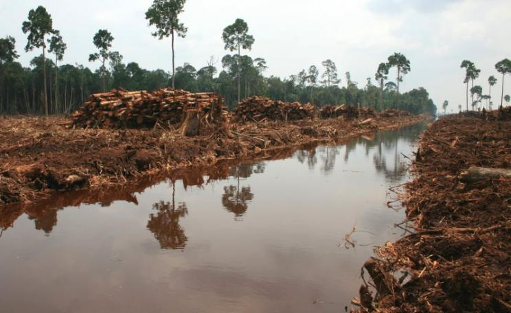 New regulations to protect Indonesia's peatlands - like this swamp forest under conversion to plantation - are doomed to failure. Photo: Rainforest Action Network via Flickr (CC BY-NC).