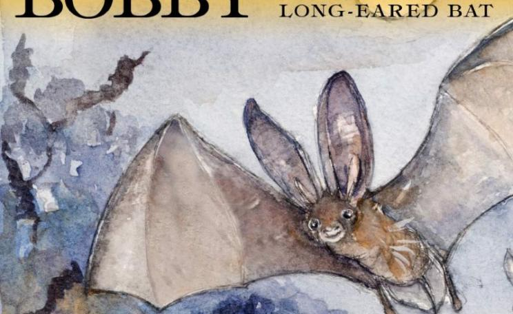 Bobby the Brown Long-Eared Bat. Image - from website: bobbythebrownlong-earedbat.co.uk.