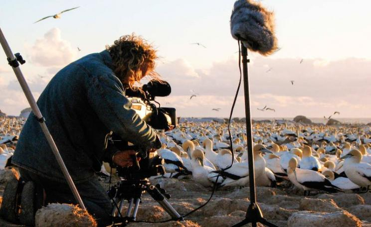 Don't forget the microphone! An Earth Touch cameraman braves the unpleasant odour of Malgas Island to get some awesome shots, and sounds, of cape gannets. Photo: Earth Touch via Flickr (CC BY-NC-SA).