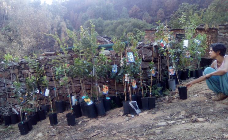 Residents replanting burned areas with native trees: In the absence of sensible forestry policy or concrete government action after the fires, residents have taken matters into their own hands.(c) Rui Freitas